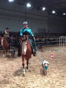 Hund und Pferd 2019
