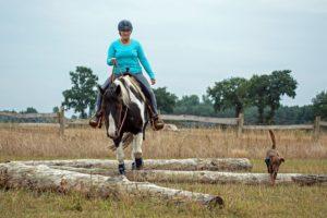 Heide Horse Trail_021 klein