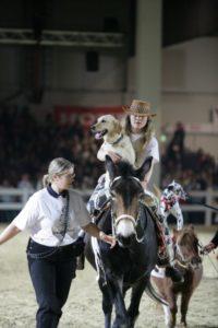 Hund und Pferd 2007