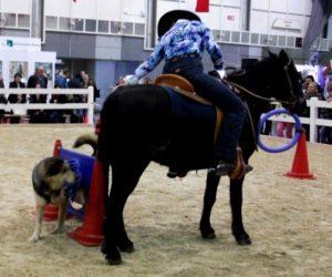 Hund und Pferd kleiner Ring